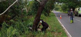 Disperkim Palangka Raya Lakukan Tebang Pohon Rawan Tumbang